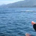 日本海のナブラ! イイですね~♪